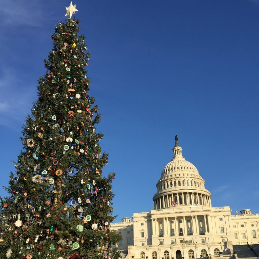 Christmas In Dc.The Most Stunning Christmas Trees Of Washington D C