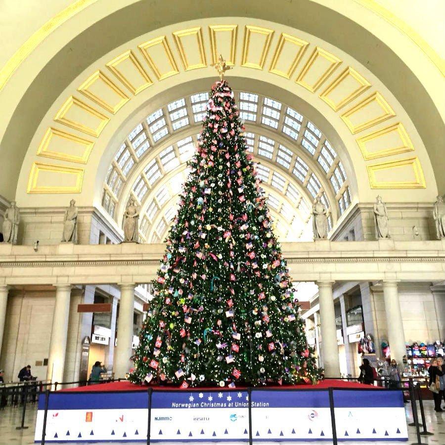 Washington Dc Christmas.The Most Stunning Christmas Trees Of Washington D C